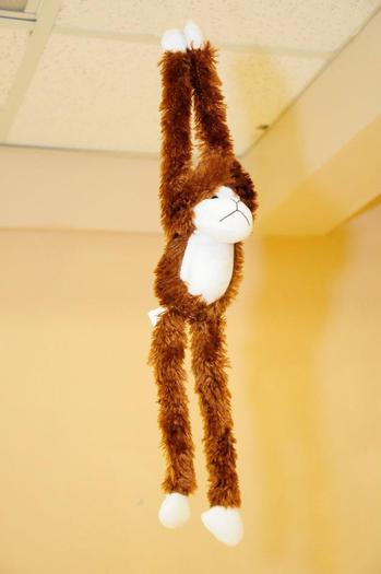 Hanging Monkey from Ceiling