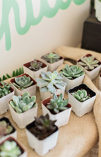 Bohemian Baby Shower plants
