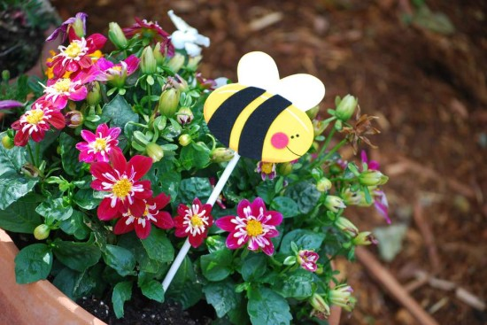 cute as can bee baby shower plants