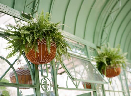 Garden Baby Shower, greenhouse plants