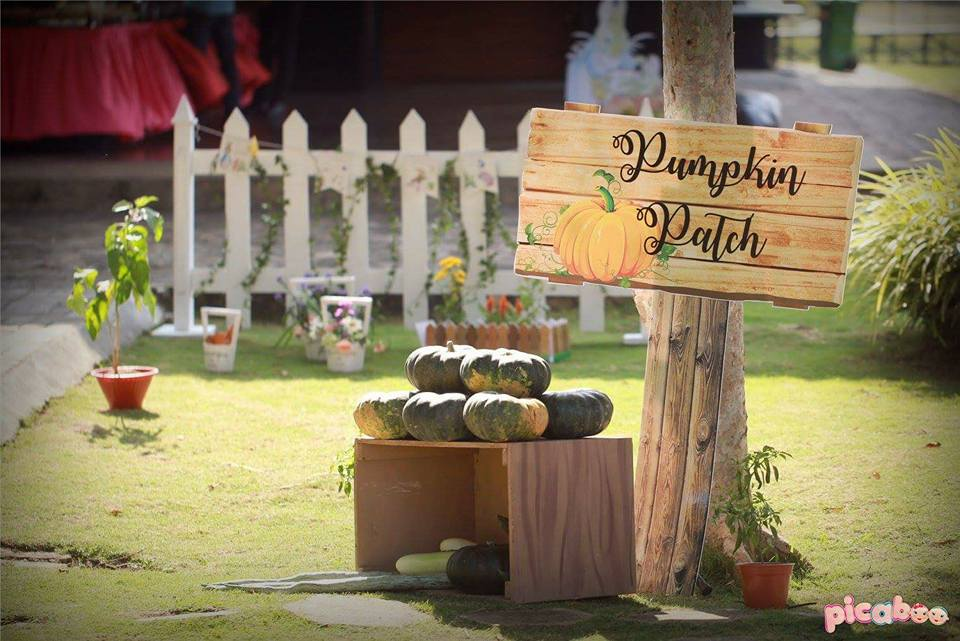 elegant-peter-rabbit-garden-party-pumpkin-patch-display
