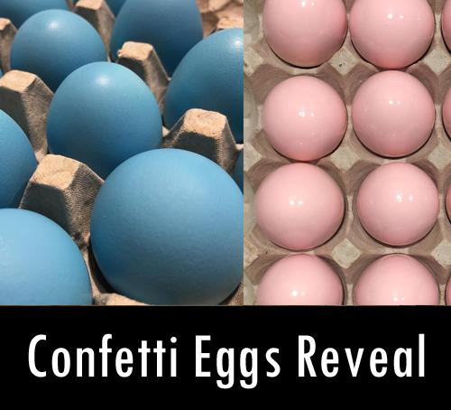 Confetti cascarones eggs gender reveal
