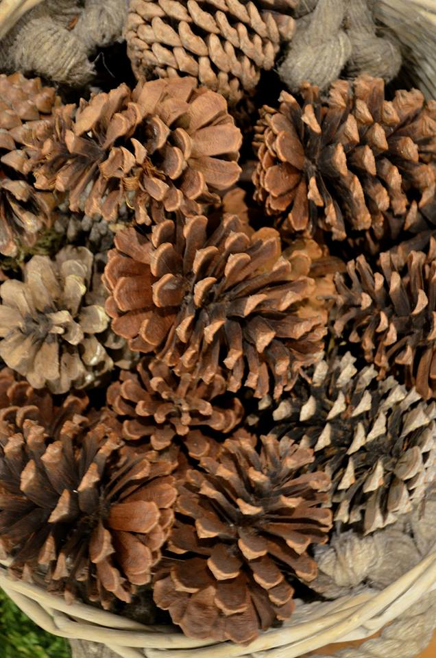 play-in-the-forest-party-decor-with-pinecone